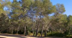 Tarragona puente del diablo pine park 4k spain Stock Footage