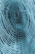 The spider web (cobweb) closeup background. Kuvituskuvat