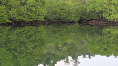 Video 1920x1080 - Mangrove trees in National Park, Koh Kood Island, Thailand. Stock Footage