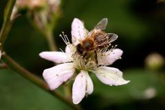 honey bee - stock photo