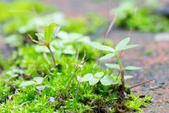 Green Moss and Small Tree at Bottom Right Stock Photos