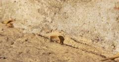 Ants road working day time 4k tarragona spain Stock Footage