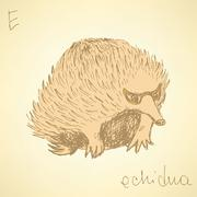 Sketch cute echidna in vintage style - stock illustration
