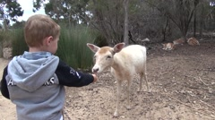 Boy feeding deer Stock Footage