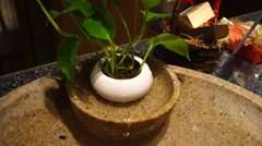 Water droplets in the bonsai plants. Stock Footage