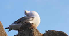 Malaga sunny day seagull clean close up view 4k Stock Footage