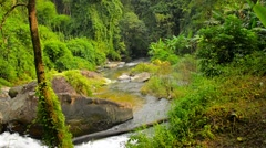 Video 1080p - Natural Stream Meanders through Clearing in Jungle Stock Footage