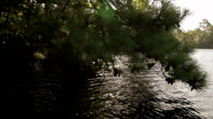 Beautiful camera move of a boat on a lake looking up through trees into the sun Stock Footage