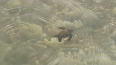 Baby sea turtle swims away Stock Footage