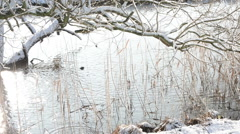 Melting ice falling down from twigs Stock Footage