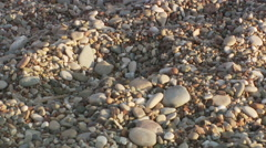 Tiny turtle hatchling crawling through pebble stones - stock footage