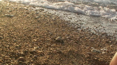 Baby sea turtle reaches ocean Stock Footage