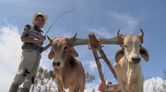 Farmer and Oxen 3 Stock Footage