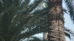 Palm Tree Trunk Bark Leaves - 29,97FPS NTSC - stock footage
