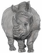Rhino Stock Illustration