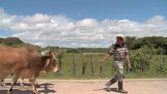 Farmer and Oxen 5 - stock footage