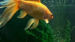 Exotic fishes Stock Footage