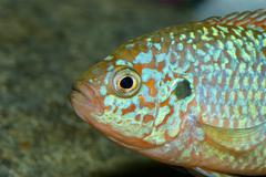 Fish portrait - stock photo