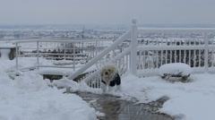 Cute Clumsy Dog Falls Face Down In The Snow And Keeps Running - Dog Playing Stock Footage
