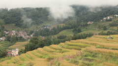 Autumn Rice Terraces Yunnan Province China Stock Footage