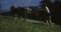 Woman Hot Pans Bra Walking to Cows 60s 70s 16mm Stock Footage