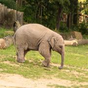 Sad baby elephant Stock Photos