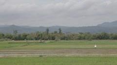 Farmer in Paddy Field Stock Footage