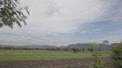 Rice Field Scenary Stock Footage
