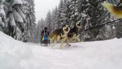 Dogsled race with running husky dogs Stock Footage