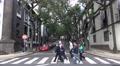 4k People crosswalk street with Jacaranda Trees Funchal city Footage