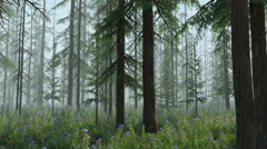 Magic Forest - Foggy Version Stock Footage