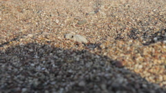 Baby turtle hatcling on beach Stock Footage