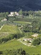 View of a tuscan vinyard Stock Photos