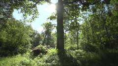 Tree highlighted from the sun Stock Footage