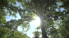 Pan shot Tree - stock footage