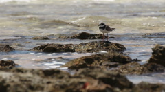 One little bird fly away from coast of the sea. 15 seconds Stock Footage