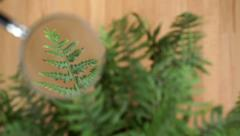 Magnified frond of a fern plant. - stock footage