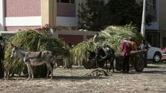 DONKEYS CARTS & SUGAR CANE, NAGAA EL-SHAIKH ABOU AZOUZ, EGYPT Stock Footage