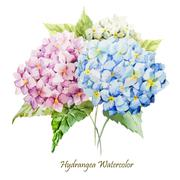 Hydrangea bouquet - stock illustration