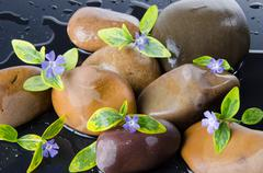 Composition of pebbles with blue flowers Stock Photos