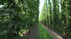 Slide through hop field Stock Footage