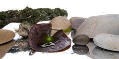 Composition with a waterlily leaf, stones and a tree branch Stock Photos