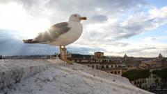 Bird on the roof looking at the city of Rome Stock Footage