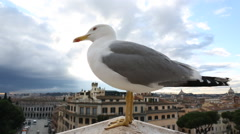 Bird on the roof looks and yells at the city of Rome Stock Footage