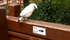 Smart bird looks at the 'exit' plate and go away in opposite direction Stock Footage