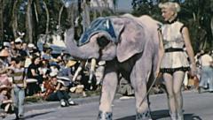 Tampa 1959: Elephant at Gasparilla parade of Pirates - stock footage