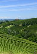Summer landscape in Langhe (Italy) - stock photo