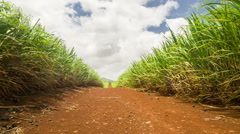 Road in the middle of fields Stock Footage