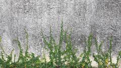 Green Creeper Plant on old concrete wall Stock Photos