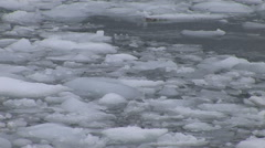 Ice Floes in Paradise Harbour, Antarctica Stock Footage